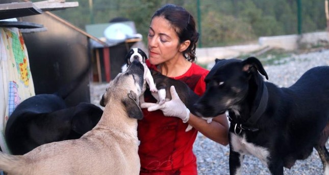 Turkish animal lover offers strays a new home on her farm
