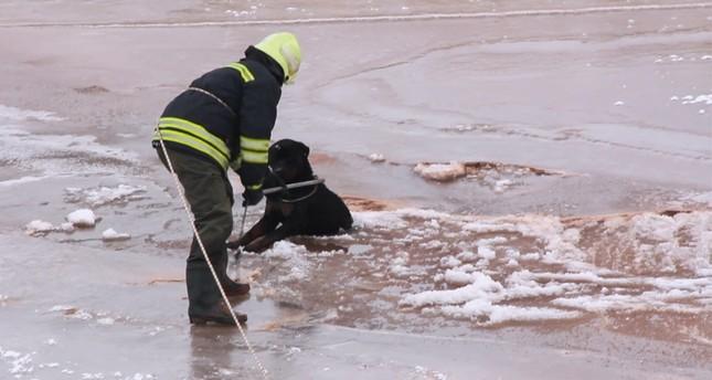 إنقاذ كلب عالق وسط نهر متجمد بولاية سيواس وسط تركيا