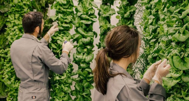 Vertical farming: The new way of urban life