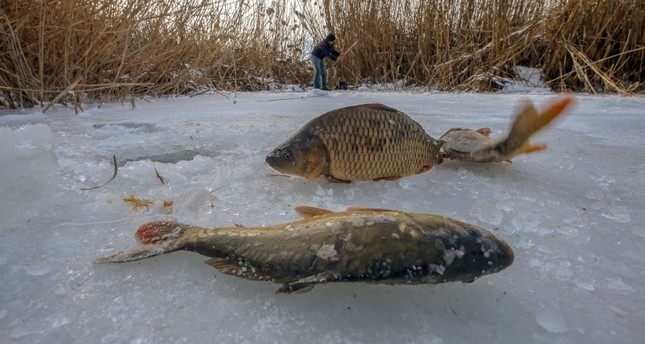وان التركية.. متعة اصطياد الأسماك تحت سطح البحيرة المتجمدة