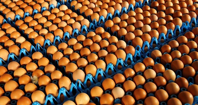 Eggs are packed to be sold at a poultry farm in Wortel near Antwerp, Belgium August 8, 2017 (Reuters Photo)