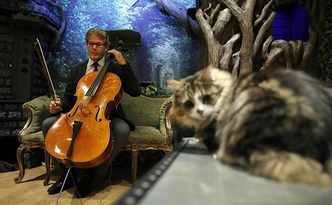 David Teie, an US composer and cellist, prepares to play his cello during a interview to ptomote his new album Music for Cats at Lady Dinah's Cat Emporium in London on October 18, 2016.