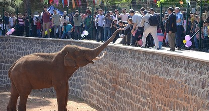 Test tube elephant celebrates birthday at Gaziantep Zoo