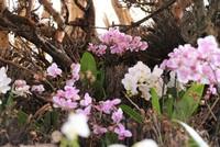 Taiwan orchid garden bridges biomes in s. Turkey