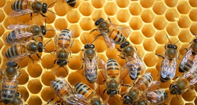 صادرات تركيا من العسل تسجل أكثر من 15 مليون دولار بـ 6 أشهر