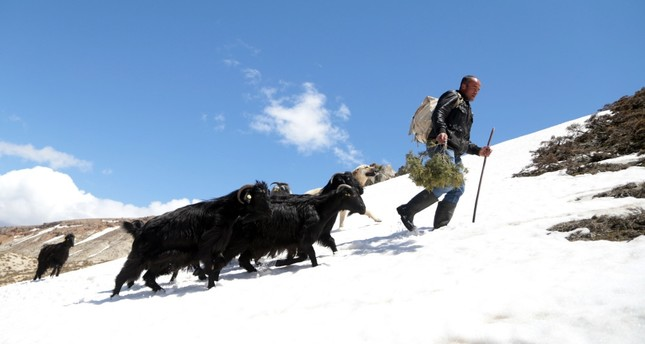 Turkish shepherds fight 'Siberian' cold to tend flocks