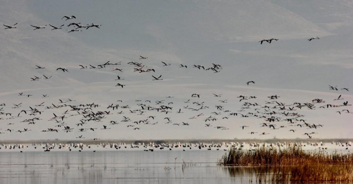 Migratory birds at Sultan Reeds National Park in Kayseri.