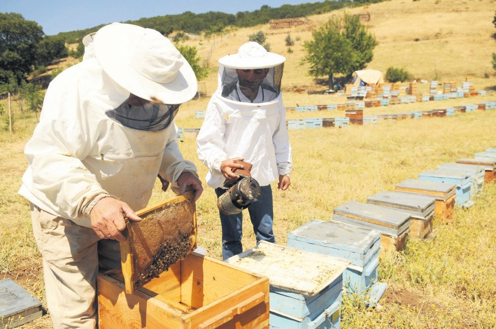 The honey harvest of the hives in Bingu00f6l plateaus continues.