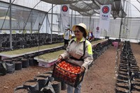 Turkish agency builds greenhouse, teaches agriculture in Mexico