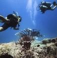 الغوص في منطقة كاش.. عالم من الإثارة والعجائب ينتظركم تحت الماء