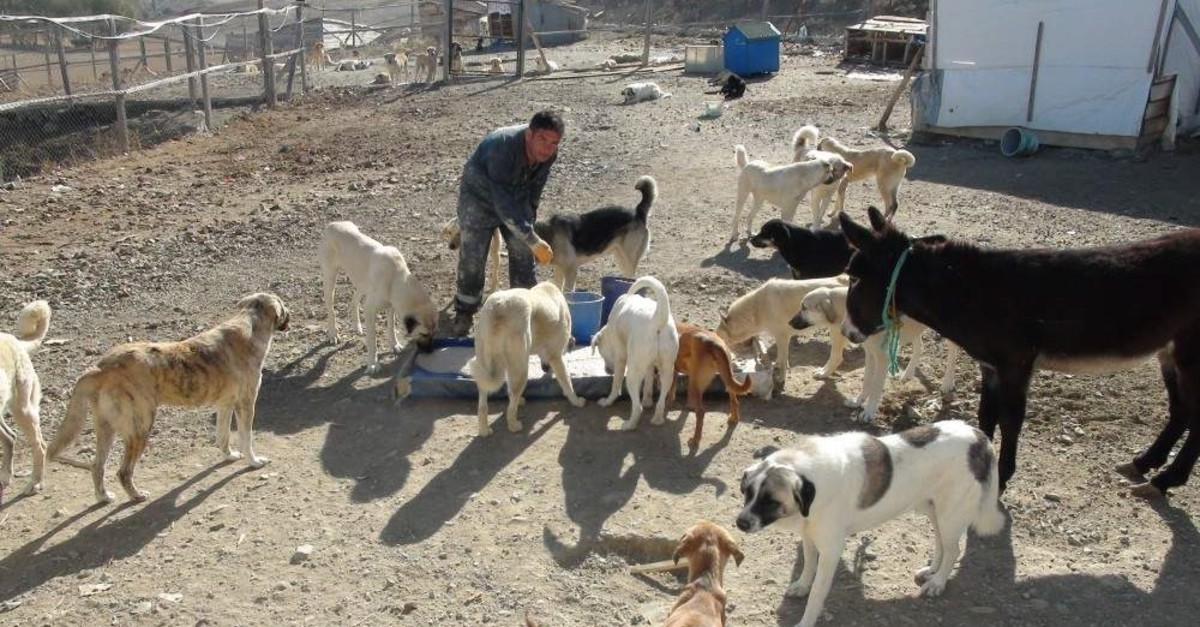 ?smail Bolat feeds stray dogs at the shelter he built in Yozgat, Turkey. (IHA Photo)
