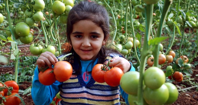 A Turkish child holding tomatoes in Mersin which exported almost 90 percent  of its tomato production to Russia prior to the embargo.