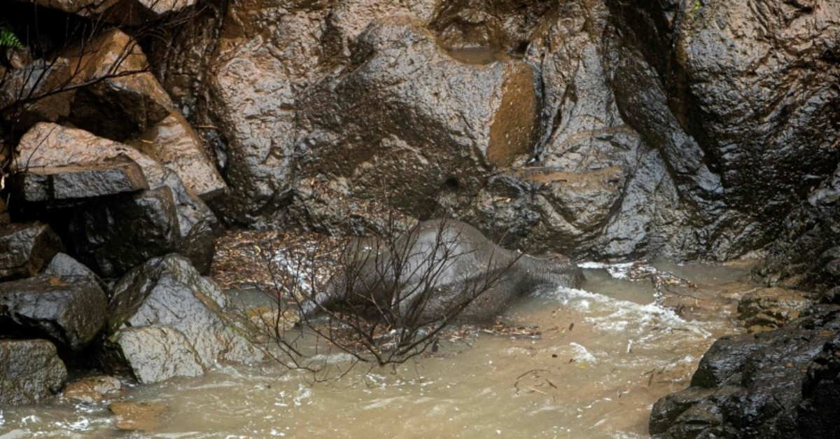 This photo by Thai News Pix taken on Oct. 5, 2019 shows a dead elephant at the bottom of a waterfall after it fell to its death at Khao Yai National Park in central Thailand. (AFP Photo)