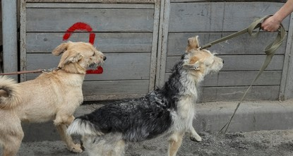 pNew regulations on animal rights in Turkey will include jail term for those charged with animal torture will face prison terms, Forestry and Water Affairs Minister Veysel Eroğlu said on...