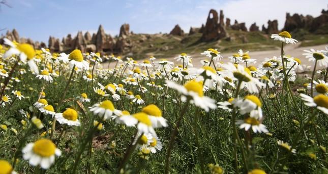 أزهار الربيع تضفي على كبادوكيا الساحرة سحراً خاصاً