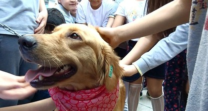 Rescued dogs teach compassion to Turkish students