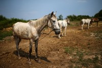 Horses in limbo after quarantine bars entry to Istanbul islands