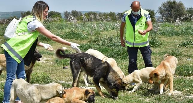 متطوعون يطعمون الحيوانات الشاردة وسط الإغلاق العام في تركيا
