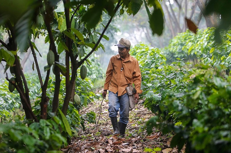 A Nicaraguan farmer surveys coffee crops whose growth could be affected by climate change (AFP Photo)
