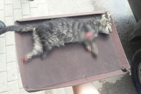 Kitten tortured to death in Turkey's Bursa with 4 paws cut off