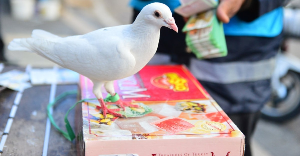 Turkish people believe that a white dove brings fortune if it picks up their lottery ticket; hence the white dove is the symbol of the National Lottery.