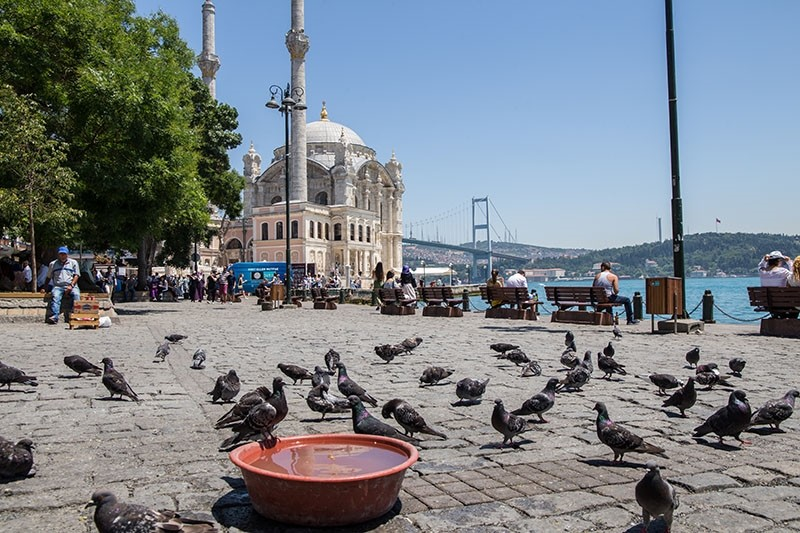 Pigeons gather near a bowl filled with water to cool off at Ortaku00f6y Square, with Istanbul landmarks Grand Mecidiye Mosque and July 15 Martyrs Bridge (Bosporus Bridge) in the background, on June 30, 2017. (Photo: Sabah / Ku00fcbra Usta)