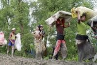 Bangladesch muss immer mehr Angehörige der muslimischen Minderheit der Rohingya aus Myanmar aufnehmen. Allein in den vergangenen zwei Wochen seien 290.000 Rohingya vor Ausschreitungen ins...