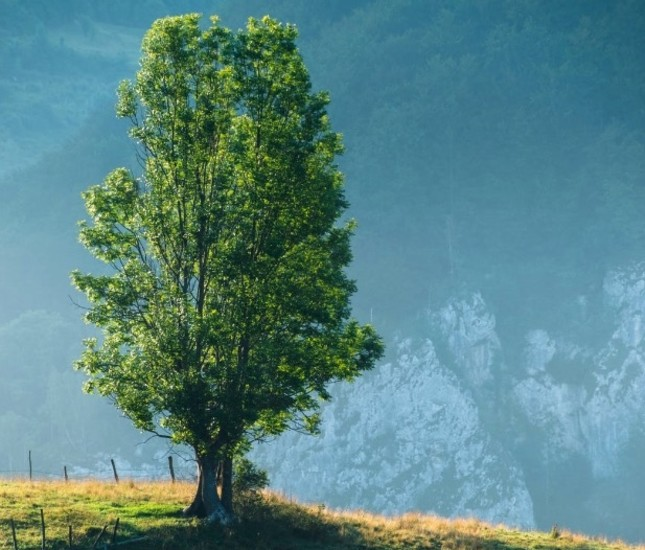 A trillion trees may erase a decade of CO2 emissions