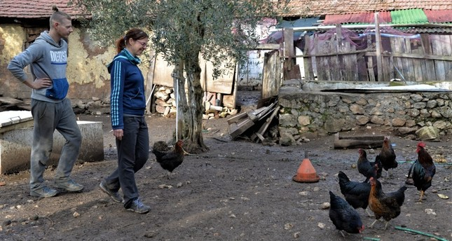 Volunteers help Selçuk Şahin, who is the owner of the farm, with daily chores.