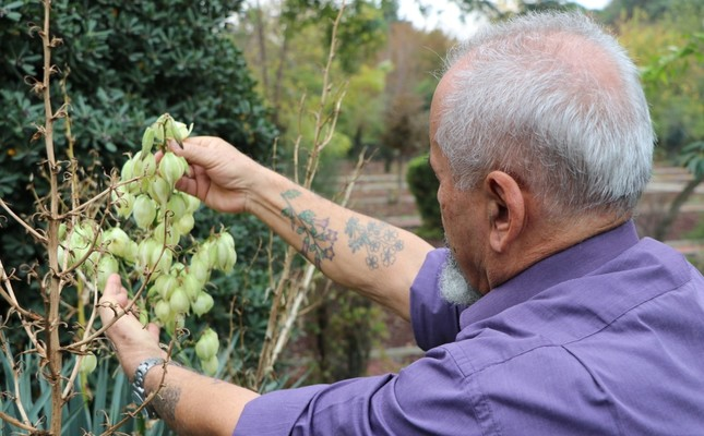 Retired botanist gets plants he discovered inked on his body
