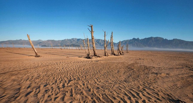 Tree trunks rise from the sand in Cape Town, South Africa where a dam used to be located.