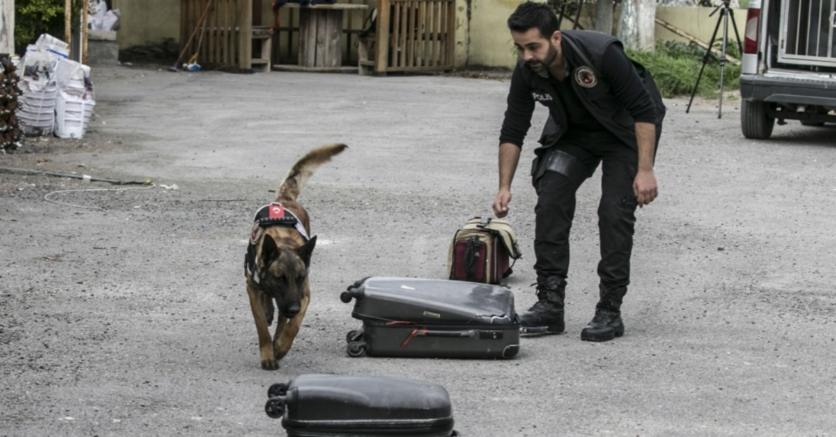 Dogs undergo rigorous training before they join human officers.