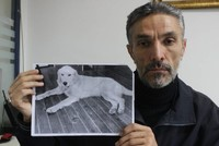 Turkish man traces his missing dog's pawprints to US