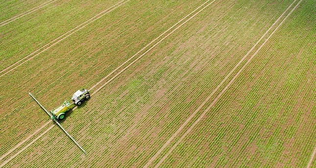 A farmer on a tractor sprays selective herbicides to control weeds on a field of sugar beets in Mustedt, Germany, May 30, 2016. (EPA Photo)
