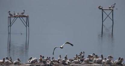 Manyas bird sanctuary in western Turkey home to Dalmatian pelicans