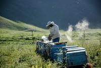 Şırnak's lavender-scented honey gaining popularity