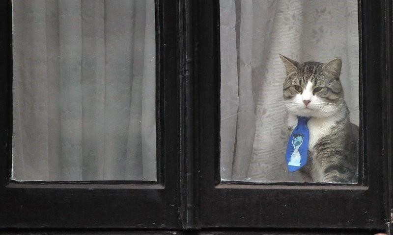 Julian Assange's cat sits behind a window at Ecuador's embassy in London. (AP Photo)