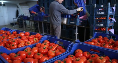 pRussian Deputy Prime Minister Arkady Dvorkovich said Tuesday that up to 50 tons of tomatoes could be imported from four Turkish companies on an annual basis, adding that Russia was expecting...