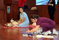 Ankara municipality trains citizens in first aid for pets