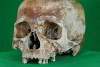 500-year-old skull goes online in 3D as part of Mary Rose project