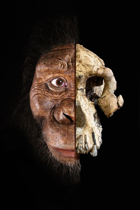 This handout photomontage released by The Cleveland Museum of Natural History on August 28, 2019, shows a partial facial reconstruction of an Australopithecus skull.(AFP Photo)