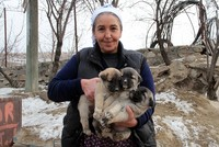 A woman's call on social media for nine puppies having trouble in finding food amid harsh winter conditions in a village in eastern Turkey has not been left unanswered by animal lovers.  At the...