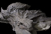 110 million year old 'dinosaur mummy' on display in Canada museum