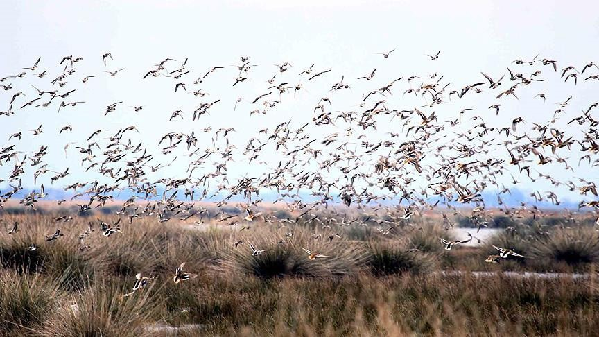 Gorano Dam attracts a large number of migratory birds as a new wetland safe from hunting.