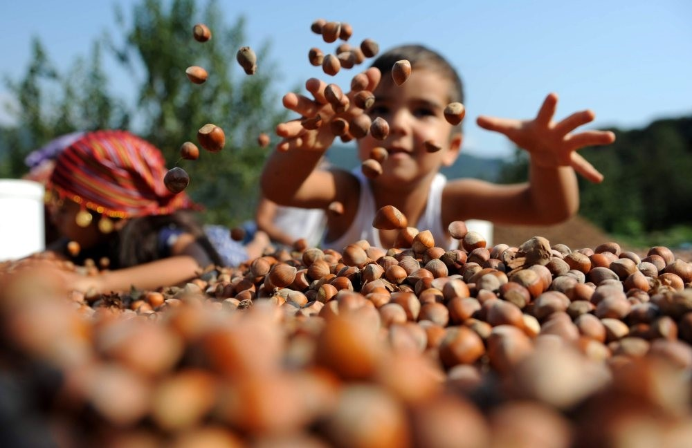 Turkey, the world's largest hazelnut exporter, saw its export volume between September 2017 and April 2018 increase by 24.6 percent compared to a year earlier, reaching $1.36 billion.