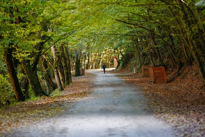 Belgrad Forest in Istanbul (Sabah File Photo)