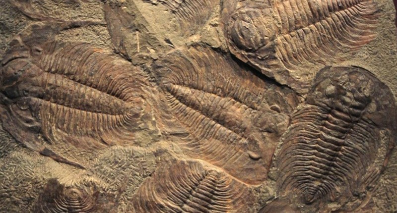 Trilobite fossils embedded in a rock (AFP File Photo)
