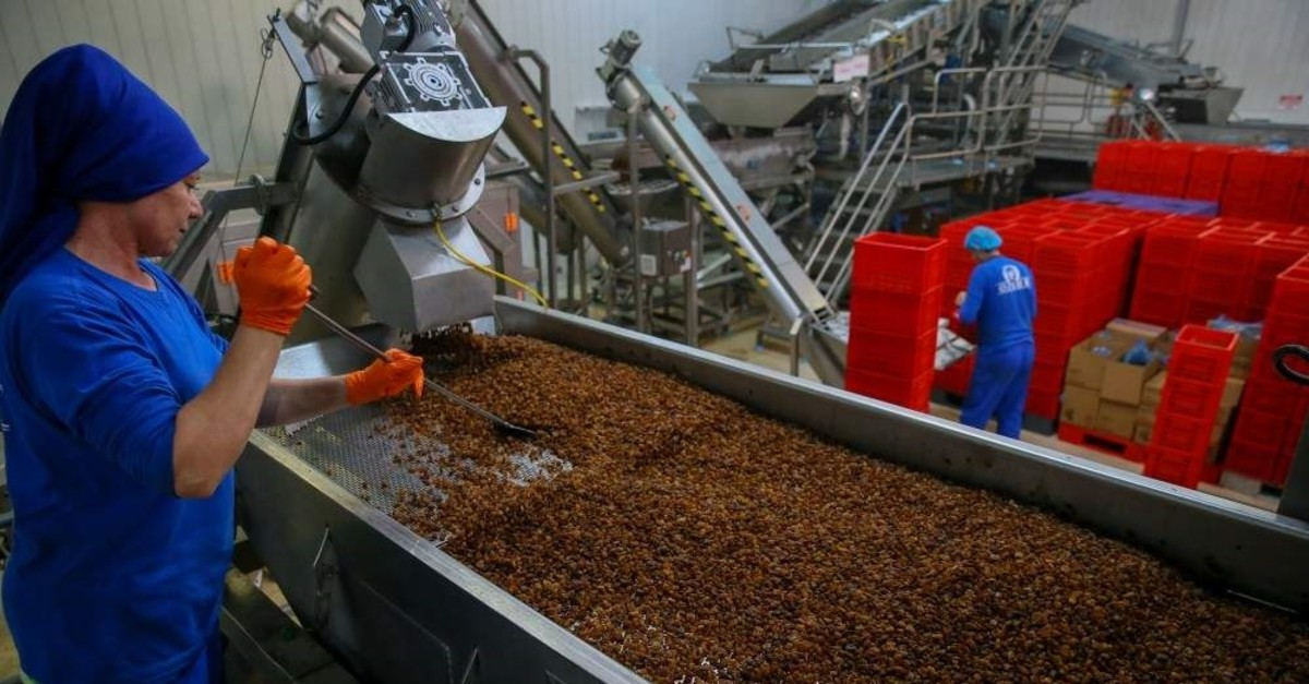 Raisin exports between Sept. 1 and Nov. 16 totaled nearly $162.71 million, recording a 9% year-on-year increase. (AA Photo)