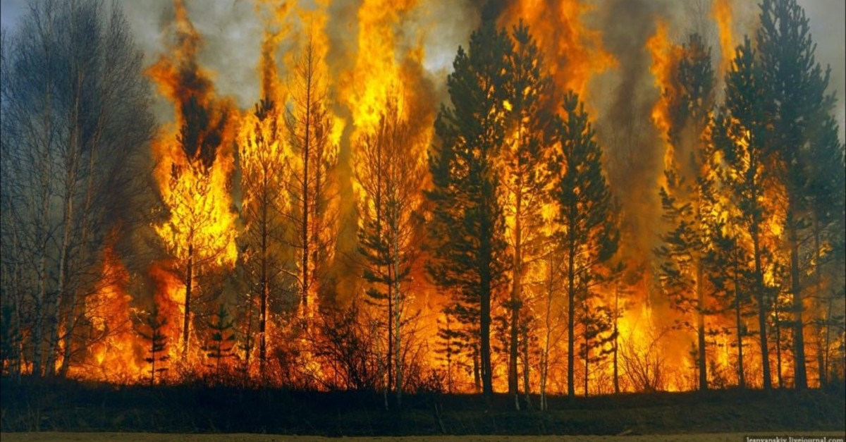 80 percent of forest fires are caused by humans.