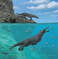 Prehistoric four-legged whale fossil found in Peru